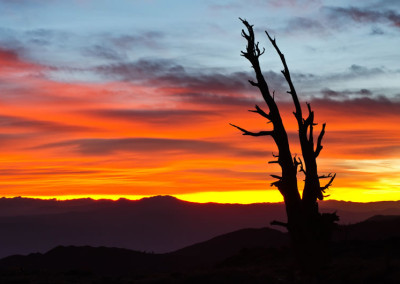 Bristlecone-Sunset Joe Lemm